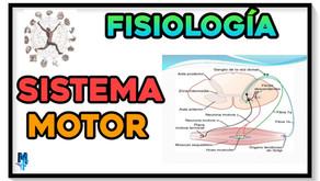 Fisiología del sistema motor