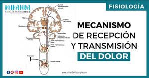 MECANISMOS DE RECEPCIÓN Y TRANSMISIÓN DEL DOLOR