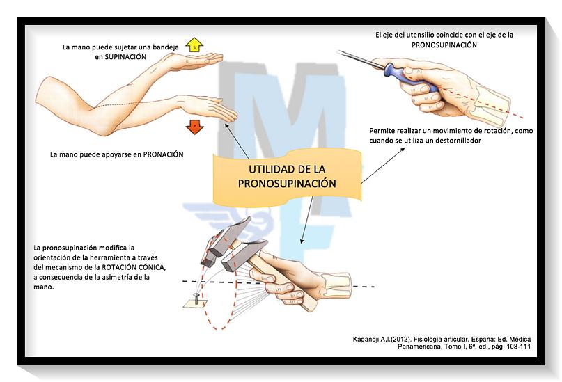 PRONO-SUPINACIÓN: Utilidad y marco radio-cubital   Miranda ...