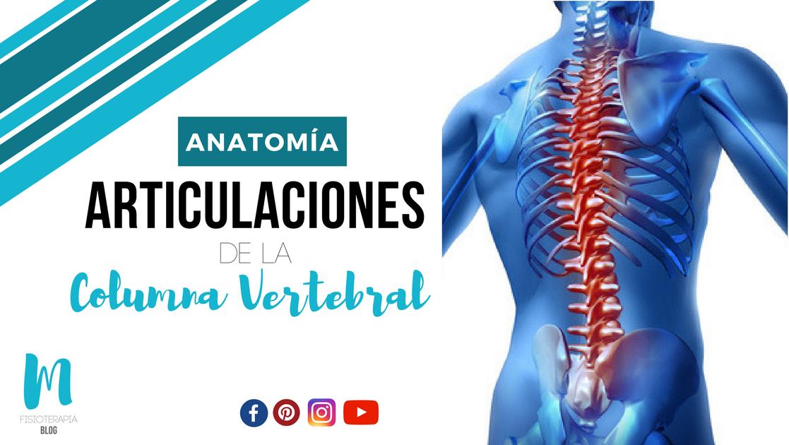 ARTICULACIONES DE LA COLUMNA VERTEBRAL | Miranda Fisioterapia Blog ...
