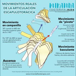 Movimientos reales de la articulación escapulotorácica - MIranda Fisioterapia blog