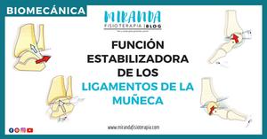FUNCIÓN ESTABILIZADORA DE LOS LIGAMENTOS DE LA MUÑECA
