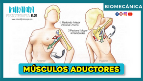 Músculos aductores del hombro