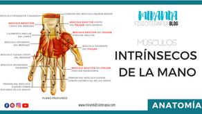 Músculos de la mano (intrínsecos)