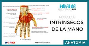 músculos intrínsecos de la mano - miranda fisioterapia blog