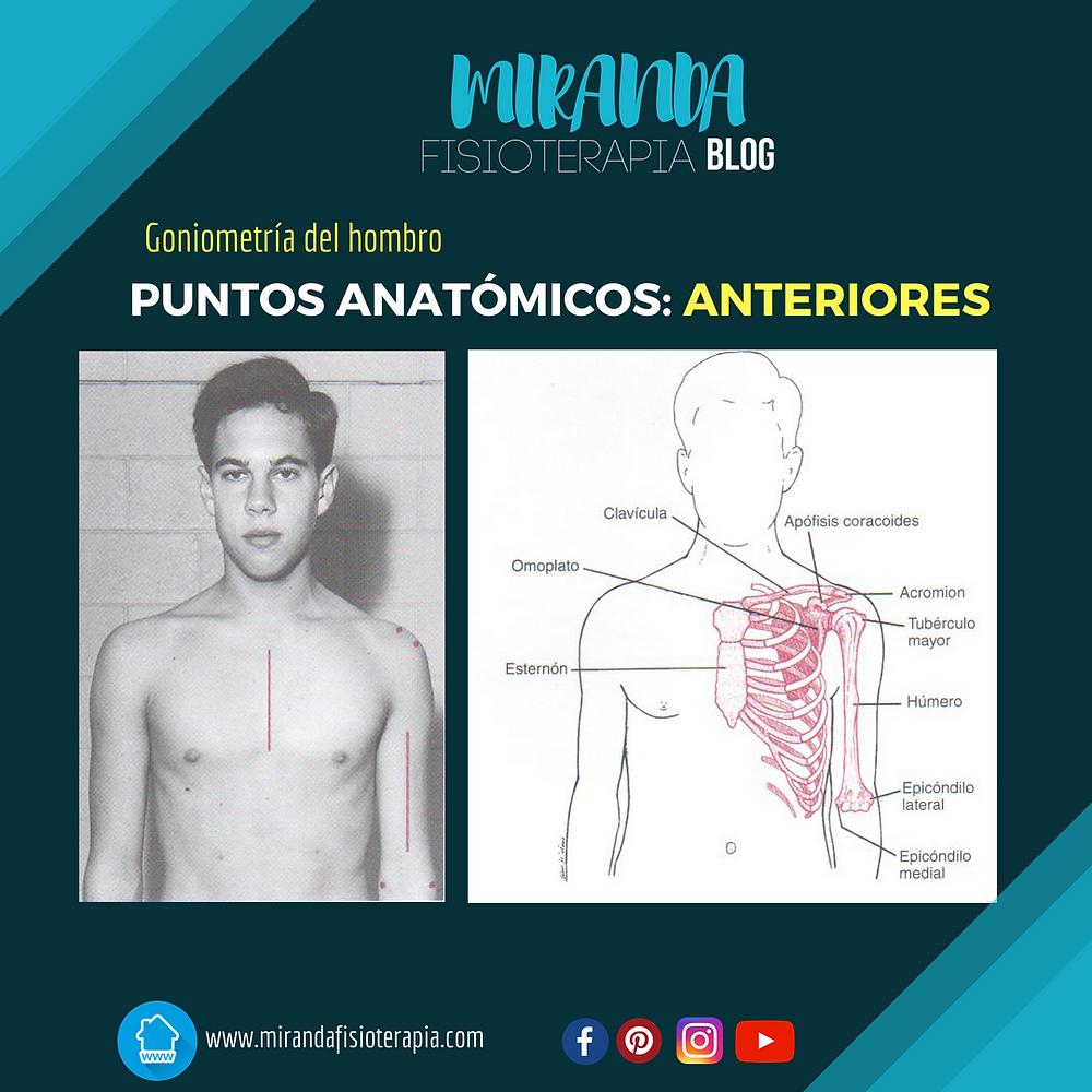 PUNTOS DE REFERENCIA ANTÓMICOS ANTERIORES DEL HOMBRO