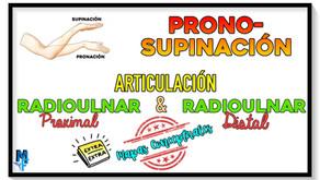 Articulación radiocubital proximal y distal (pronosupinación)