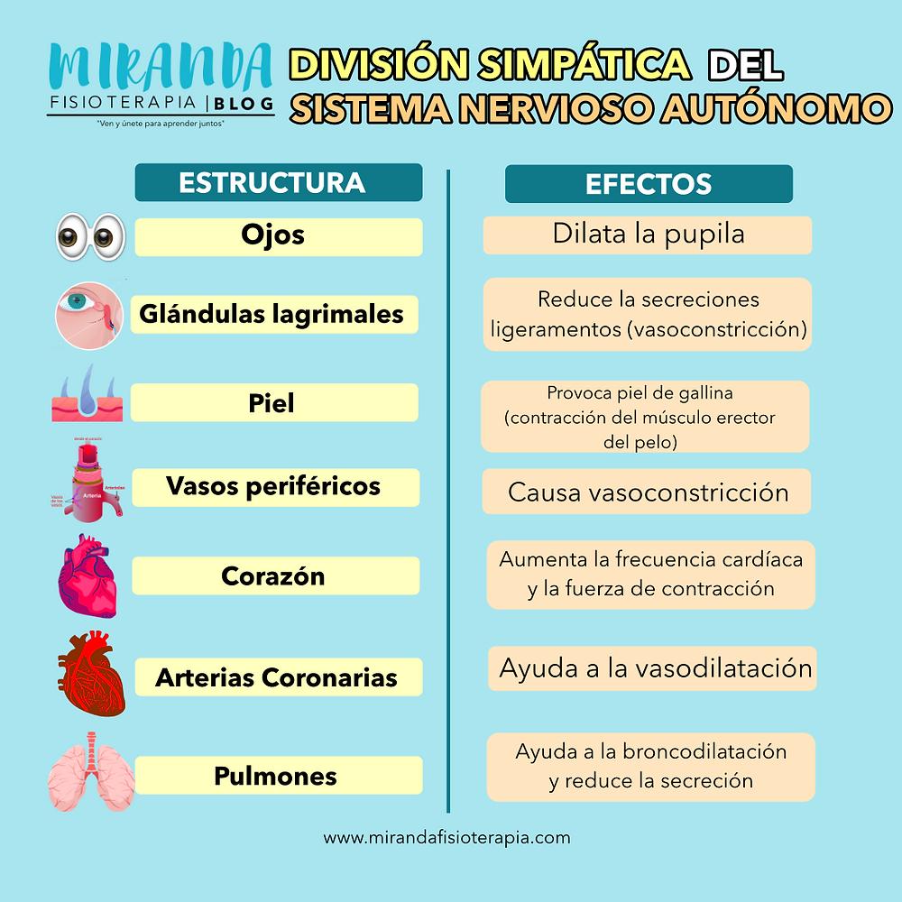 Funciones específicas del sistema nervioso autónomo