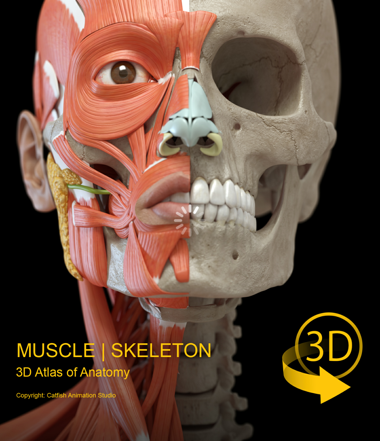 Muscle Anatomy 3D