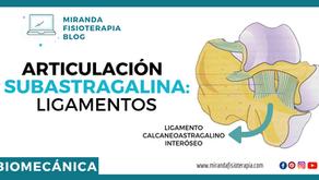 Articulación subastragalina: Superficies articulares y ligamentos