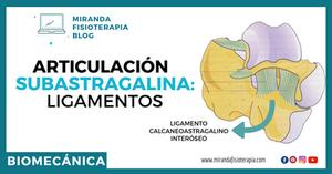 articulación subastragalina: ligamentos - miranda fisioterapia blog