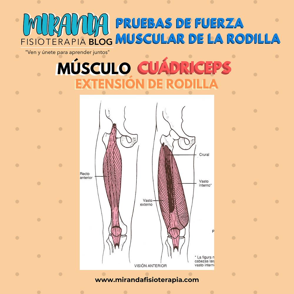 Pruebas de fuerza muscular de la rodilla: músculo cuádriceps extensor de rodilla