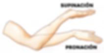 fisiolgía articular de la pronosupinación
