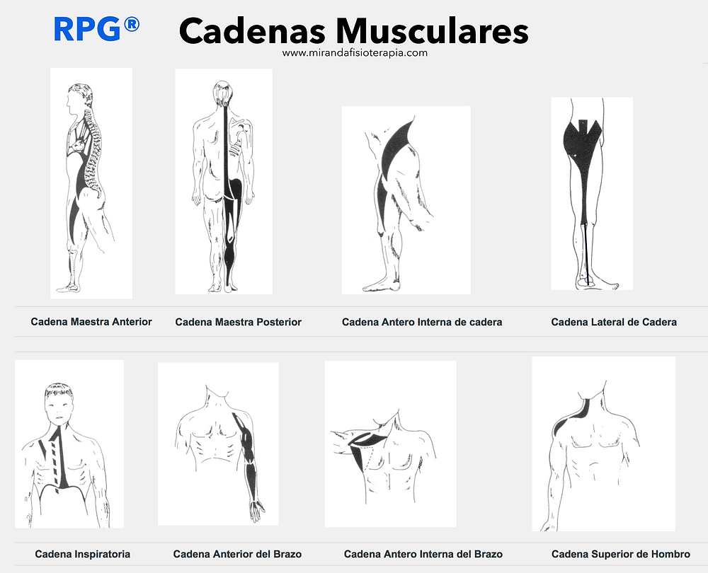 RPG® Cadenas Musculares   Miranda Fisioterapia BLOG