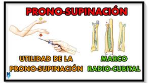 Utilidad de la pronosupinación y marco radio-cubital