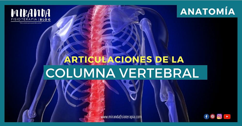 articulaciones de la columna vertebral - miranda fisioterapia blog