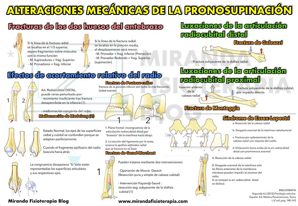alteraciones mecánicas de la pronosupinación - miranda fisioterapia blog