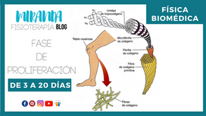 Inflamación: Fase de proliferación de 3 a 20 días