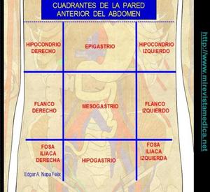 CUADRANTES DE LA PARED ANTERIOR DEL ABDOMEN - CAVIDADES CORPORALES