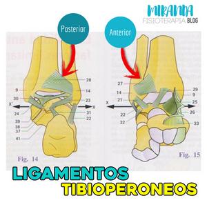 ligamentos tibioperoneos anterior y posterior del tobillo
