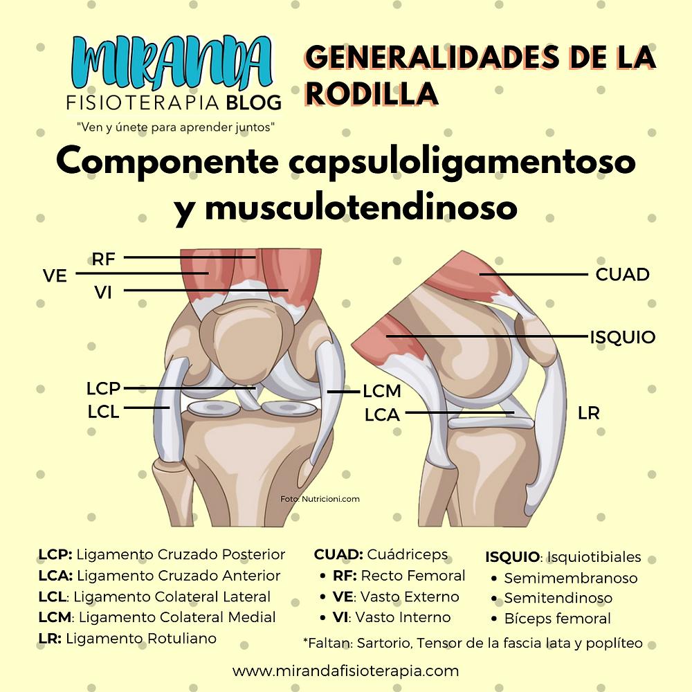 Generalidades de la rodilla: componente capsuloligamentoso y musculotendinoso