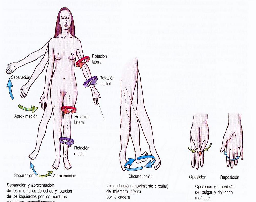 abducción, aducción, rotación lateral, rotación medial, circunducción, oposición reposición - terminología anatómica