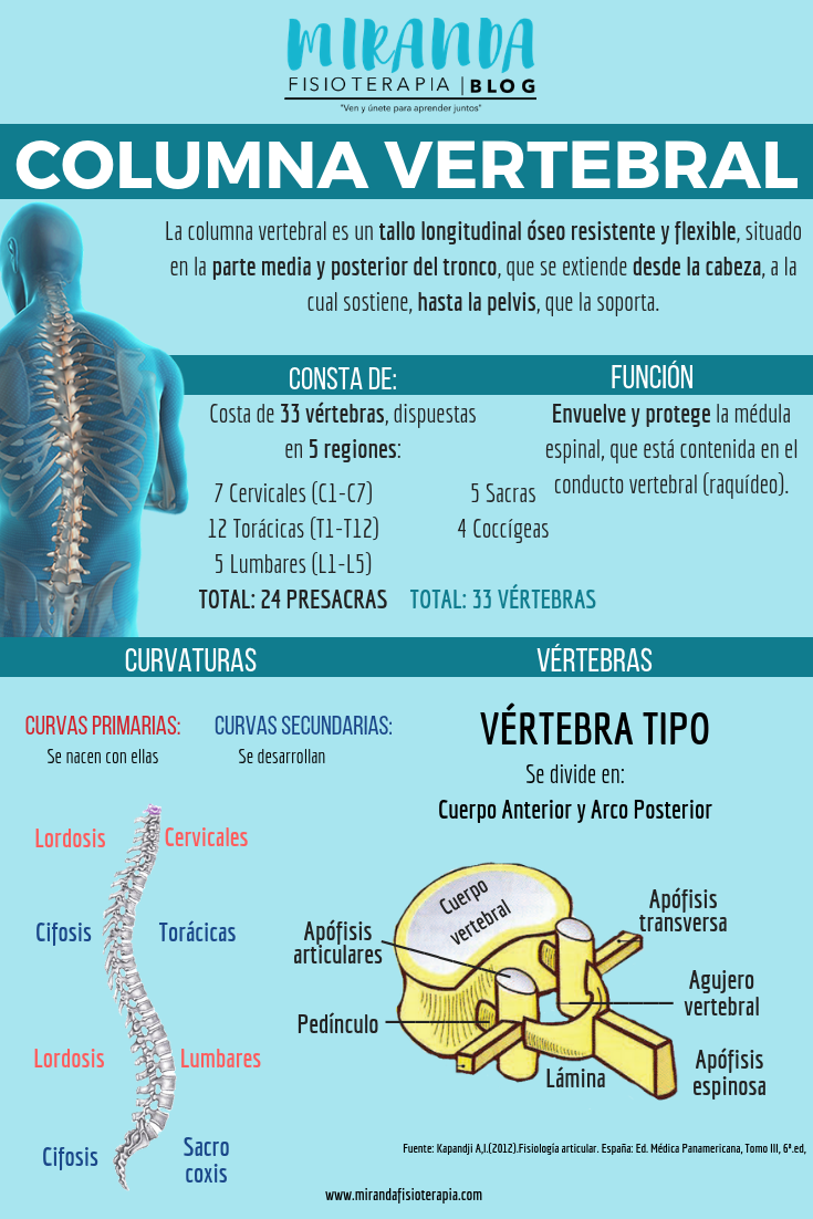 infografía: columna vertebral - miranda fisioterapia blog