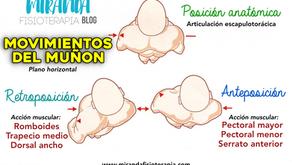 Movimientos del muñón del hombro en el plano horizontal