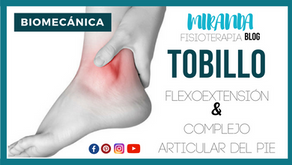 Flexo-extensión y complejo articular del tobillo