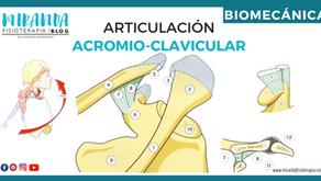 Articulación acromioclavicular (verdadera)