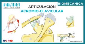 biomecánica: articulación acromioclavicular