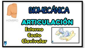 Articulación esterno-costo-clavicular