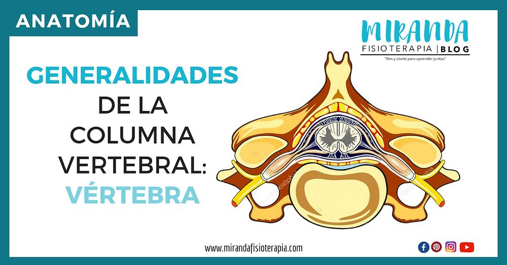 generalidades de la columna vertebral - vértebra tipo