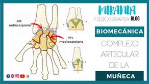 Complejo articular de la muñeca: articulación radiocarpiana y articulación mediocarpiana