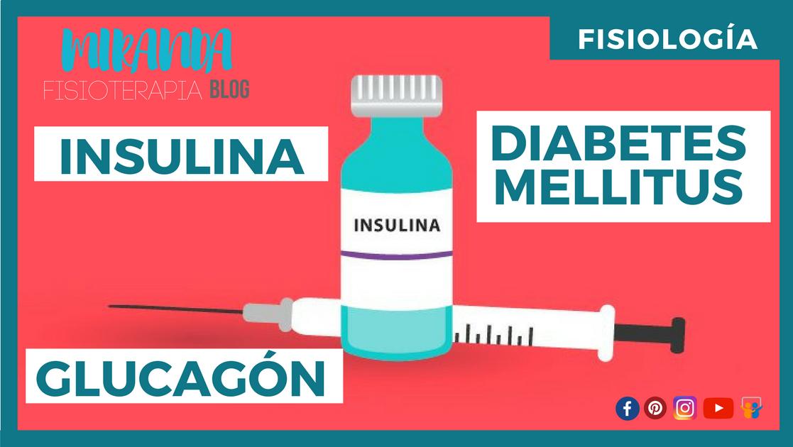 INSULINA, GLUCAGÓN Y DIABETES MELLITUS | Miranda Fisioterapia Blog ...