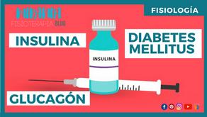 Páncreas: glucagón e insulina (diabetes mellitus)
