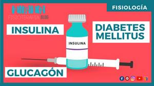 FISIOLOGÍA: INSULINA,GLUCAGÓN Y DIABETES MELLITUS