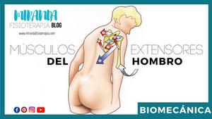 músculos extensores del hombro: biomecánica