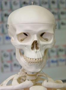 Cavidad dorsal: cavidad craneal y cavidad vertebral