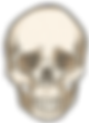 anatomía humana: osteología
