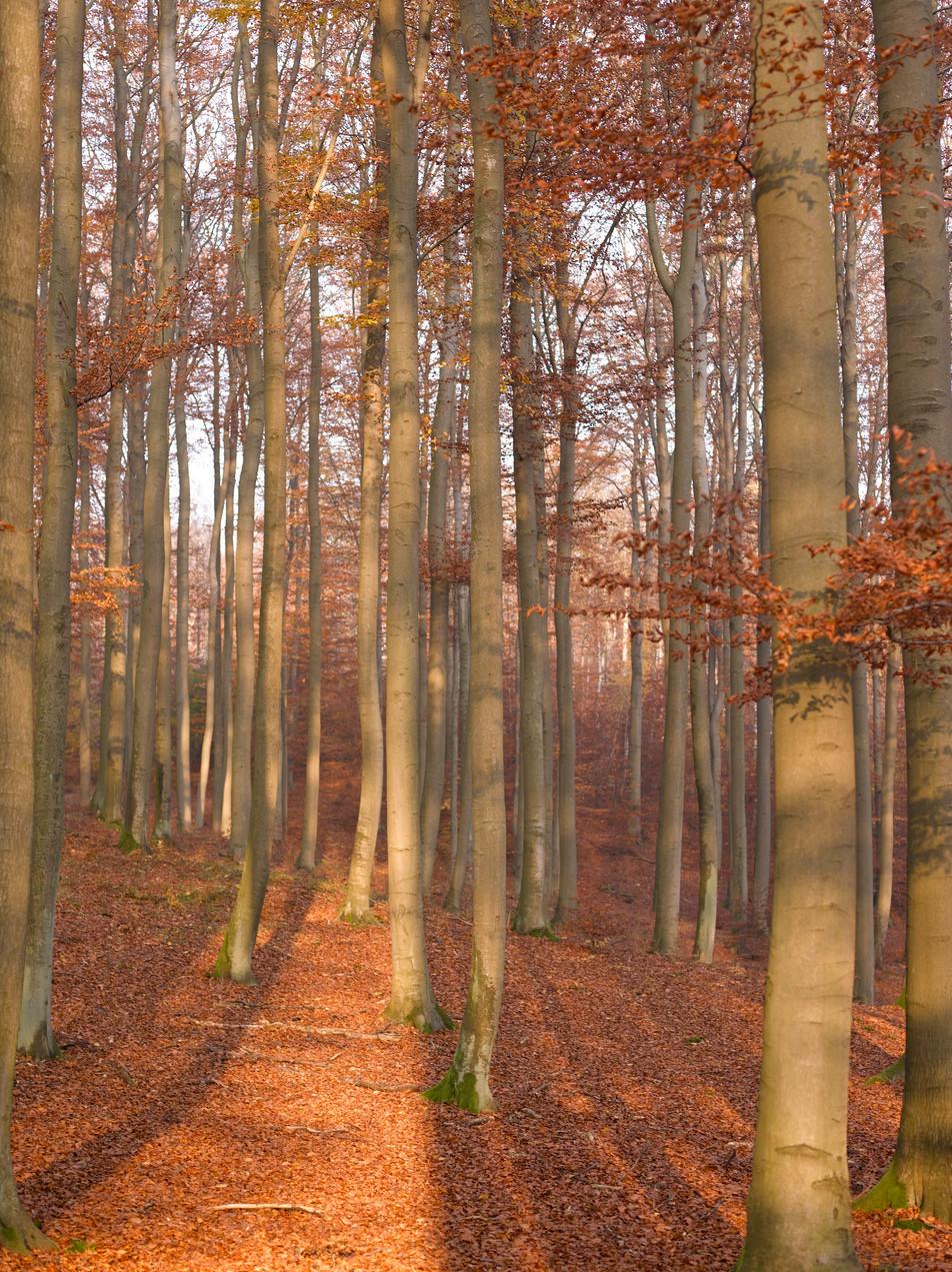 Herbstwald No. 10
