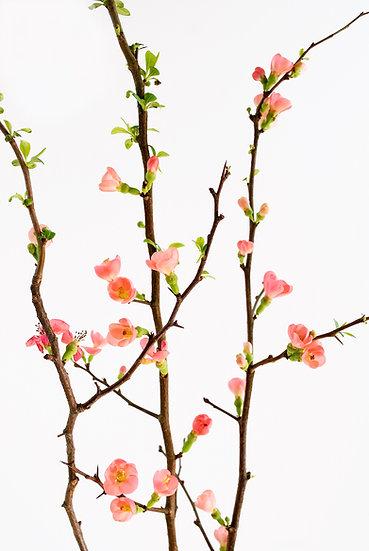 Baumblüten No. 29