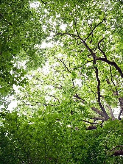 Blätterdach No. 08