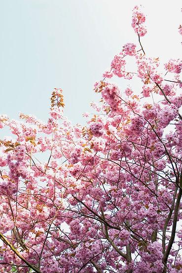 Baumblüten No. 26