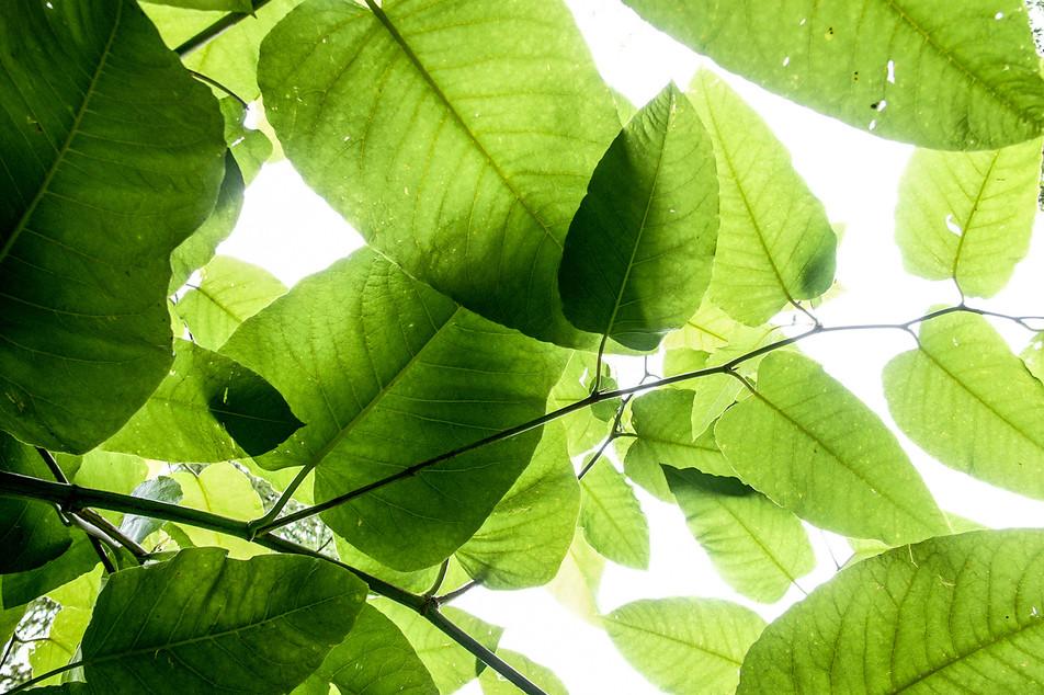 Blätter No. 05