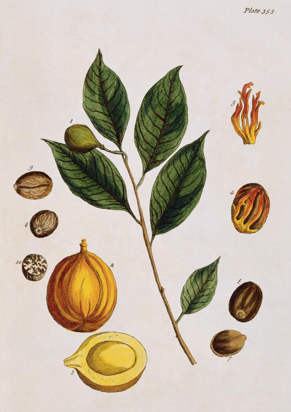 Blumen Illustration No. 08