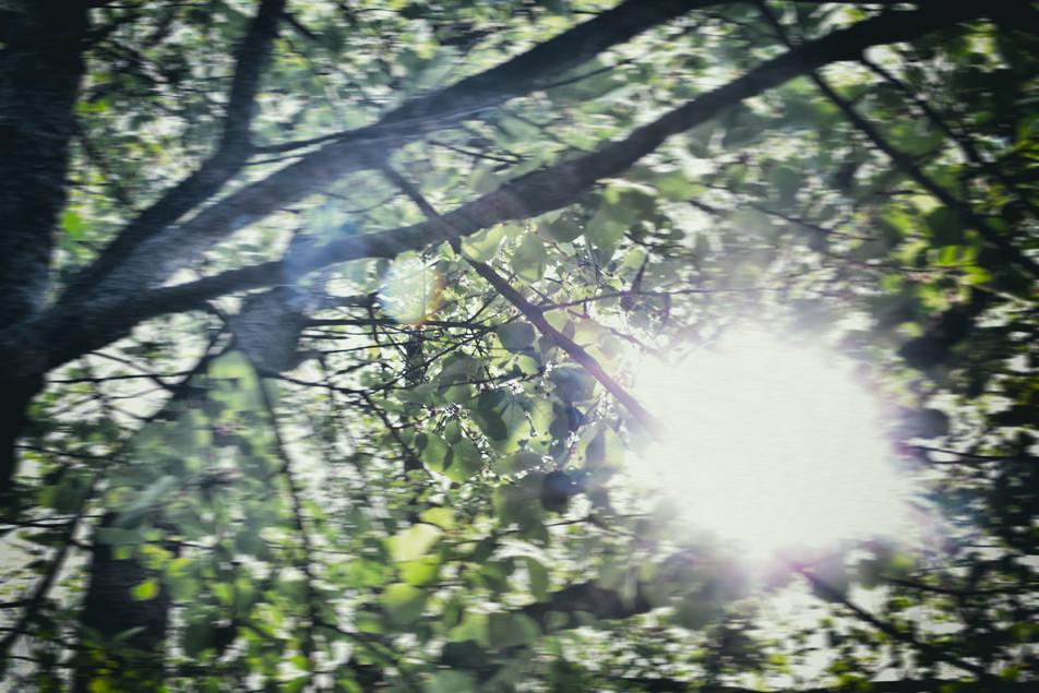 Blätterdach No. 09