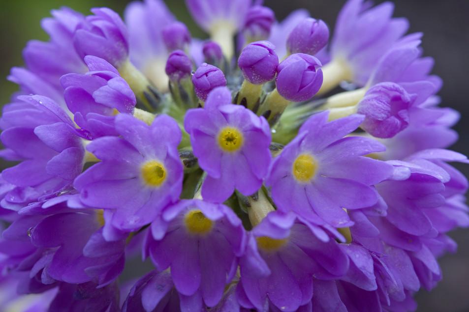 Flowers Blue No. 01