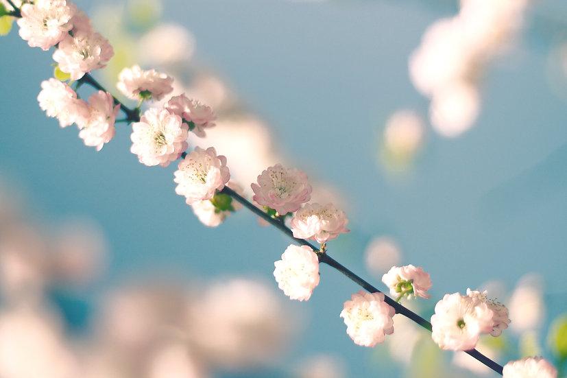 Baumblüten No. 03