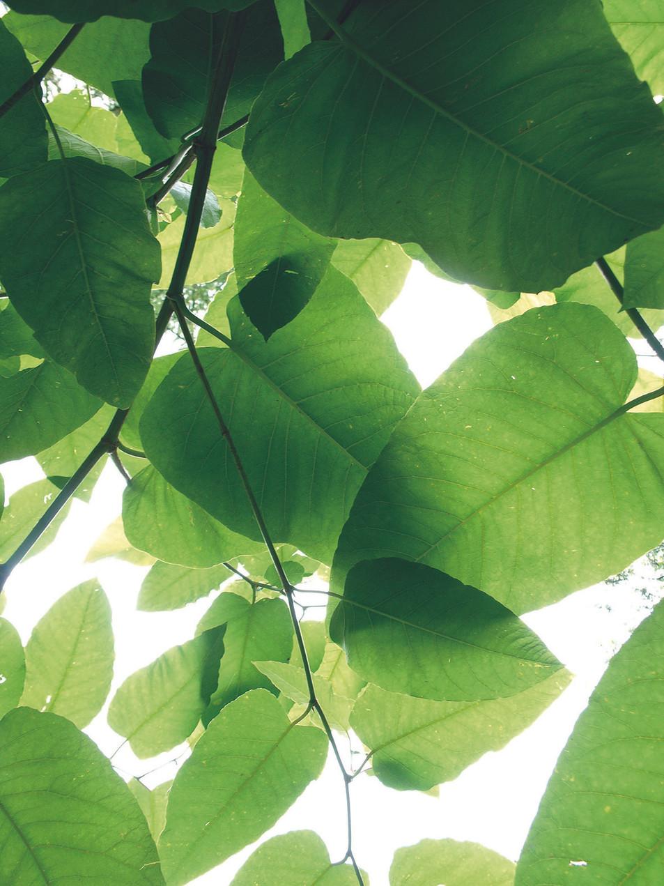 Blätter No. 04